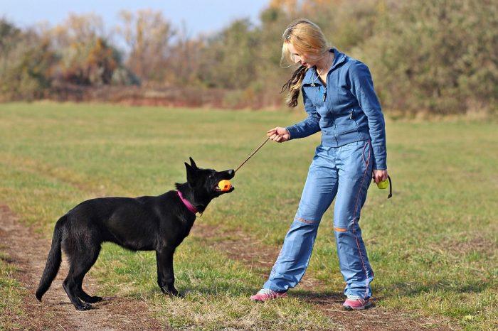 Изображение - Почему собаки валяются в тухлятине и экскрементах proxy?url=https%3A%2F%2Fzoolog.guru%2Fwp-content%2Fuploads%2F2018%2F08%2Fpost_5b6438092c9c7-700x466