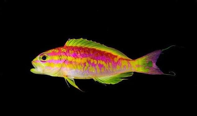 Изображение - У берегов бразилии на глубине 120 метров обнаружили необычную рыбку proxy?url=https%3A%2F%2Fzoolog.guru%2Fwp-content%2Fuploads%2F2018%2F10%2Fpost_5bae9069743df