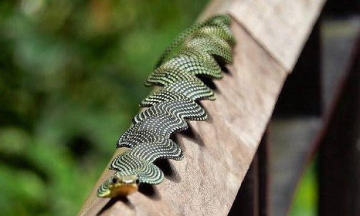 Изображение - Редкие и необычные змеи, о которых мы ещё мало знаем proxy?url=https%3A%2F%2Fzoolog.guru%2Fwp-content%2Fuploads%2F2019%2F02%2Fpost_5c5df487dc1dd-700x420